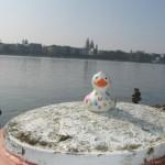 Blick auf Mainz
