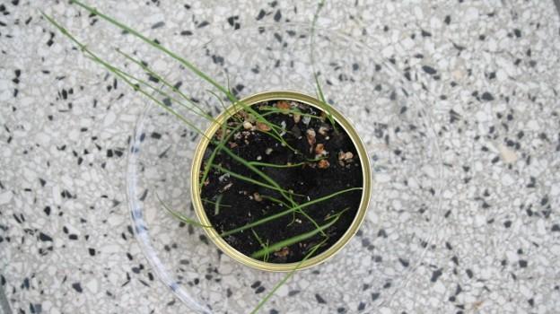 Gras aus der Dose