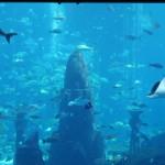 Das Aquarium strahlt die Hotelgäste im Ostturm an.  Die Rochen grinsten einen gefühlt immer an.