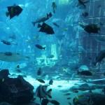 Im Hintergrund sieht man zwei Throne nebeneinander. Das ganze Aquarium ist dem untergegangenen Atlantis gewidmet.