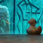 Ludmilla war auch in den Lost Chambers, um den Fischen Hallo zu sagen.