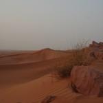 Der Sand war angenehm warm und weich. Der Wind formt die kleinen Wellen. Nur wie das Gestrüpp überlebt, ist mir ein Rätsel.