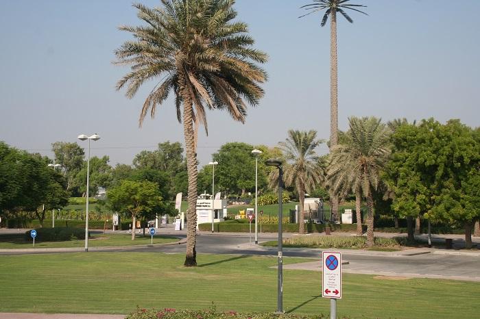 Dubai ist für eine Wüstenstadt sehr grün. Kein Wunder: 1 Million Liter Wasser verbraucht Dubai am Tag. 70% werden davon aus dem Meer gewonnen und aufbereitet.