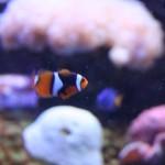 Nemo fanden wir auch, aber er hatte es eilig.